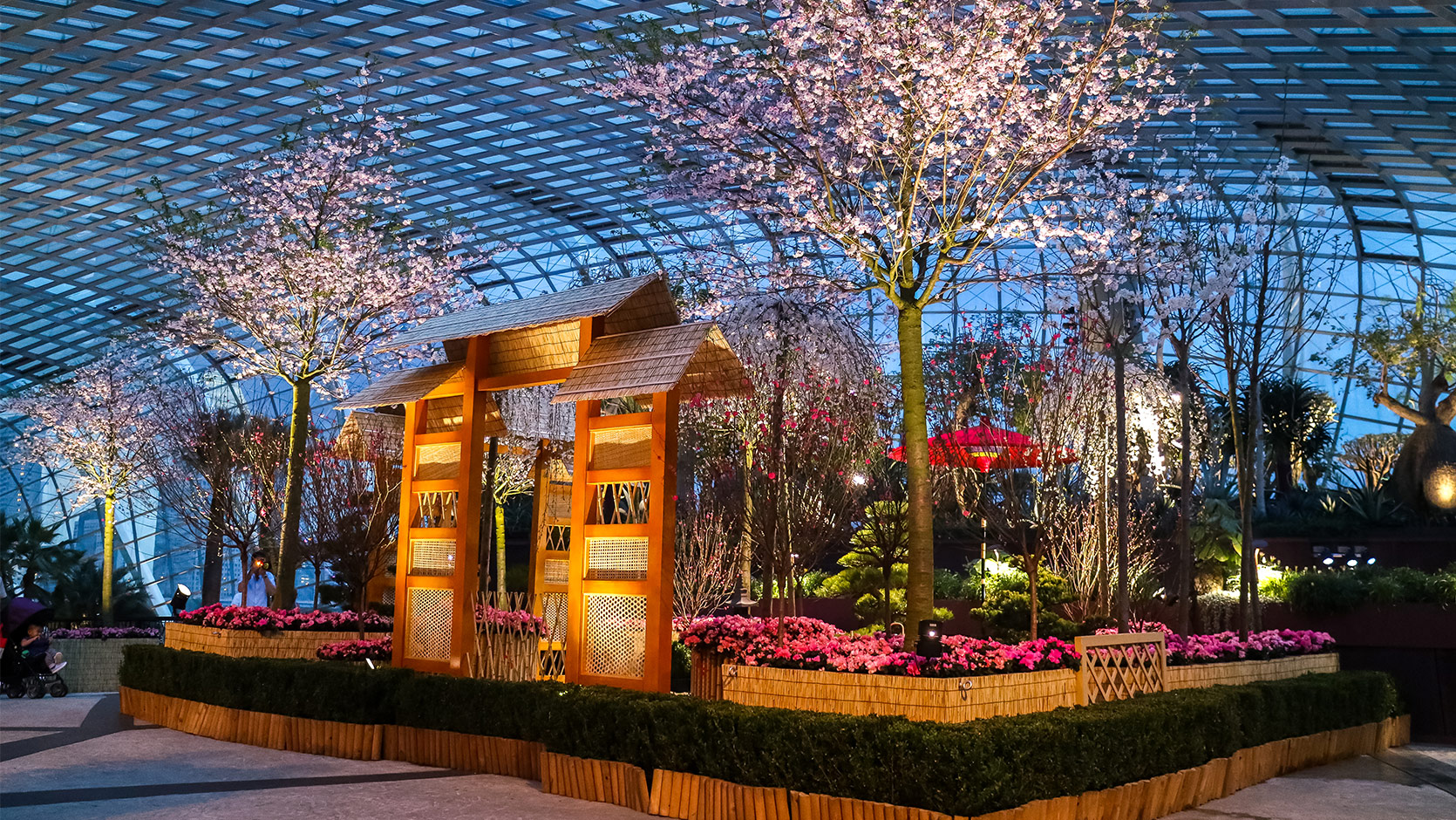 2016 blossom beats sakura floral display gardens by the bay