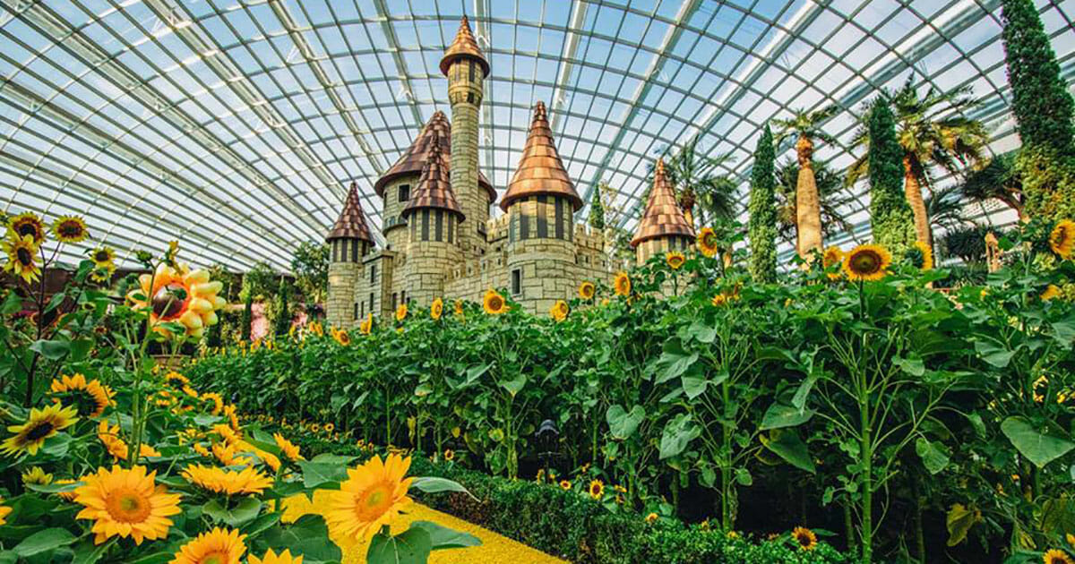 Gardens by the Bay's Flower Dome transforms into 'The Land of Oz' paved with over 10,000 Sunflowers