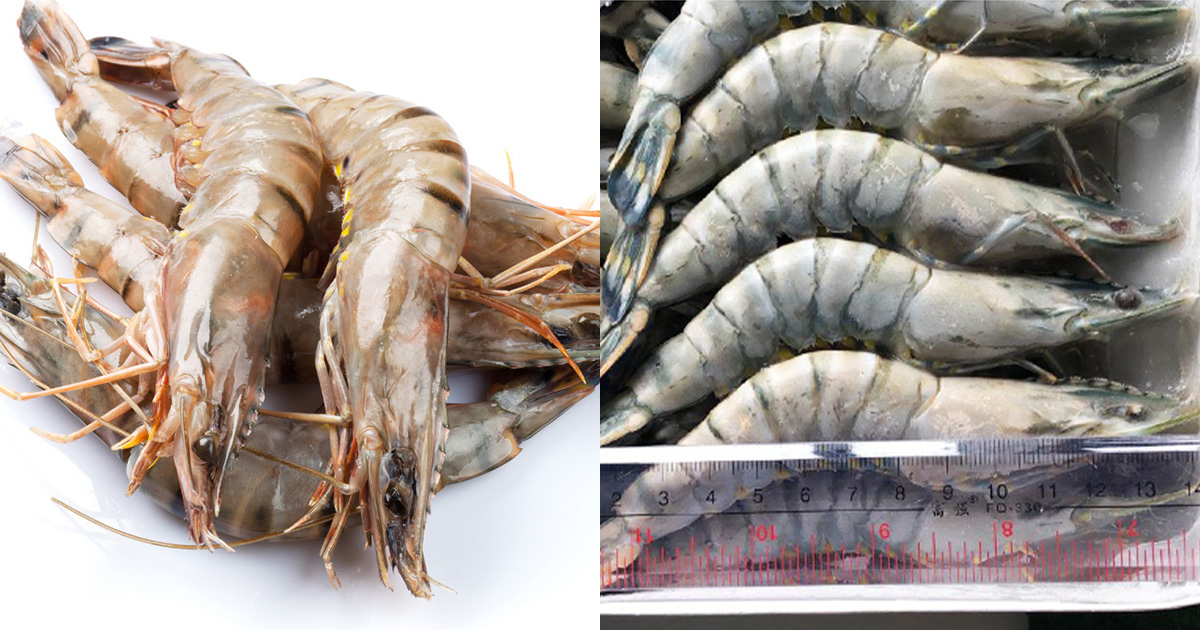 Seafood retailer selling 1kg Tiger Prawn for only $9.90, each prawn around 15cm in length